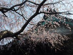 2011.4 鎌倉~桜・長谷、大町他