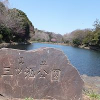 横浜市鶴見区の「県立三ツ池公園」とみその公園「横溝屋敷」をウォーキングしました!