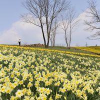 "Solitary Journey [1355] 春の喜び""スイセンファンタジー2014""&早春の花""クロッカス""<備北丘陵公園・みのりの里>広島県庄原市"