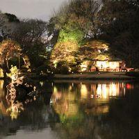 駒込 六義園  しだれ桜はまだつぼみだったけれど…ライトアップにわくわく!