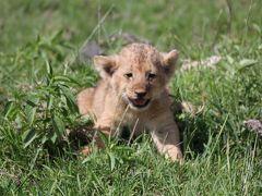 野生の楽園タンザニア(3)ンゴロンゴロ自然保護区・クレーター