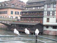 2014年1月ポルトガル・ドイツ・ちょっとだけフランス(6)☆ストラスブール