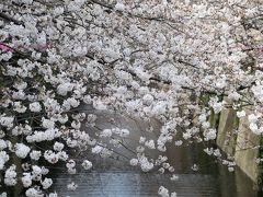 さくらのある風景~目黒川散策~