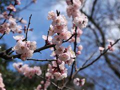 春なので東京ぶらりしました(1) 湯島、根津、上野編