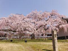 京都('12 花見)