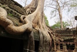 2014春、カンボジア旅行記2(36):3月22日(7):シェムリアップ、タ・プロム遺跡、マガジュマルの巨木、回廊、デヴァター像、中央祠堂
