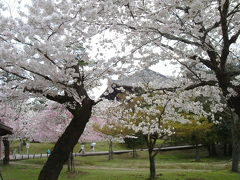 奈良桜たより 2014