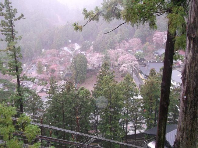 楽しみにしていた枝垂れ桜も満開で、至るところ枝垂れ桜三昧でしたが、大雨。私は雨女よ。そこで<br />①寺館内を開放してくれていて、散策しました。総本山なので、驚くような立派な建物。広い廊下。そこには日蓮上人の法難絵巻が飾られていて楽しめました。<br />②信徒さんの集まりがありすごいシャンデリアの下でお経を聞き、」<br />③宝物館で、鎌倉時代の絵を見たり<br />④手前のロビーで画家のギャラリーを楽しみ、<br />⑤寄贈の何千万かするだろうお宝も見ました。