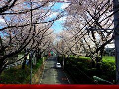 毎年恒例の桜坂 2014
