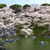 東京千代田区さくら祭り・・北の丸公園~江戸城本丸跡~千鳥ヶ淵~靖国神社~外濠公園をめぐります