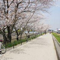 知多半島桜めぐり