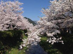 山口県人の山口散策~2014年春~