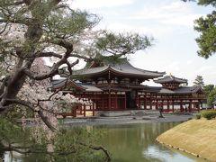 2014年 京都に春到来、桜を見に宇治へ行こう!