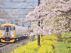 満開な上総湊の桜並木と菜の花を見に訪れてみた