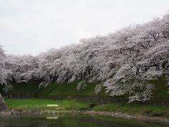 2014.4 桜満開の名古屋城