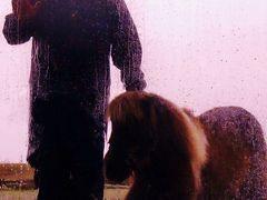 マザー牧場b 【牧羊犬とまきばの仲間たち】ショー ☆アグロドームで見学
