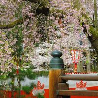 醍醐寺「醍醐の花見」 なーんちゃって?