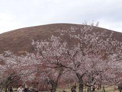 伊豆半島日帰り桜追っかけ(10)完 伊豆高原 さくらの里は大勢の花見客で賑わっていました。