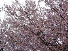 春爛漫の伊豆旅行♪ Vol1(第1日目) ☆伊豆高原へGO! 海老名SA♪伊東マリンタウン♪