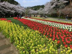 絶景! 世界一美しい桜とチューリップの庭園!!