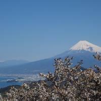 桜と富士山を愛でる旅  <地獄から天国へ>