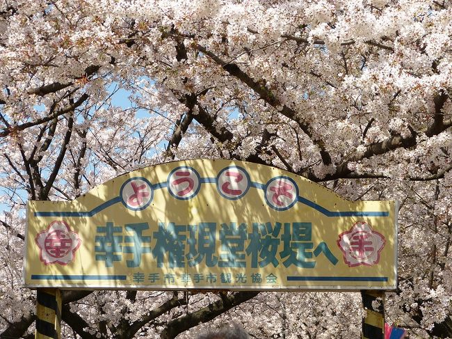 都心の桜は3月最後の日曜に満開となりましたが肝心の天気は雨でした。その後、雨が降ったり強い風が吹いたりで散り始めてきたようなので、都心以外の場所を探し、埼玉県の桜の名所・幸手市の権現堂桜堤に行くことにしました。<br />