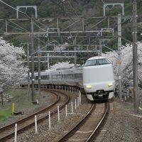 桜紀行 2014 PART 6 JR阪和線 山中渓駅を訪ねて