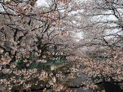2014 麻生川の桜