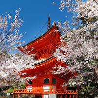 和歌山 『和歌の浦(高津子山)の桜』、『紀三井寺の桜』、『和歌山城の桜』 他 ( 『雑賀崎灯台』、『番所庭園』 )
