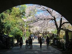 小さい公園 音無親水公園の桜 満開です