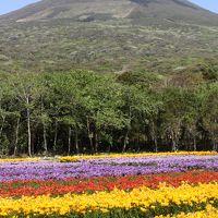 2014年 春の八丈島 【1】フリージアまつり、八丈植物公園、裏見ヶ滝、地熱館