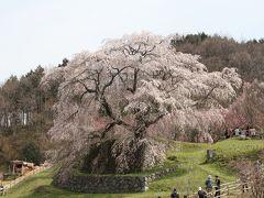 桜紀行 2014 PART 7 奈良県 枝垂れ桜巡り 秘境もあり