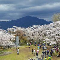 桜の弘法山ハイキング・オフ会 (富士山初登頂をめざしてトレーニングVOL3)