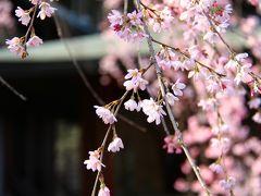 鎌倉の春を撮ってきました (円覚寺・東慶寺・高徳院)