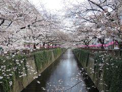 お花見さんぽ♪目黒川