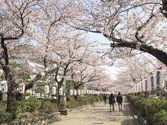 鎌倉の春を撮ってきました (若宮大路、段葛、ちょっとだけ極楽寺)