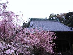 鎌倉の春を撮ってきました (妙本寺・本覚寺・鶴岡八幡宮源平池)