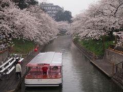 青春18きっぷで出掛けよう 2014春♪ 「栄えある今年初の花見は富山市に決定(^。^)y-.。o○」