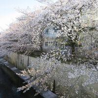 2014 お花見散歩 ☆大田・目黒区境あたり