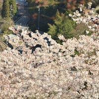 吉野山の千本桜を見に訪れてみた・・・がしかし