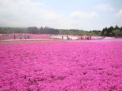 母の日のプレゼントは……富士芝桜を見にドライブ