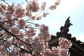 ひとりお花見部 2014② 花まつりは京都でお花見 ー本法寺~妙蓮寺~上品蓮台寺~立本寺篇