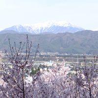 信州桜の上田、高遠、春日の3名城と名湯草津