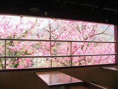 '14 花桃&桜のわたらせ渓谷鉄道3 足尾銅山観光と足尾駅から花桃号トロッコ列車乗車