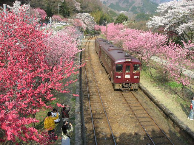 '14 花桃&桜のわたらせ渓谷鉄道4 花桃&桜満開の神戸駅と列車レストラン清流