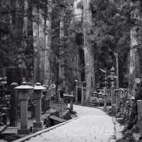 桜咲く吉野山へ【1】~真言密教の聖地高野山~
