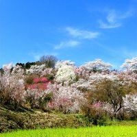◆福島の桃源郷・花見山・2014・Part?
