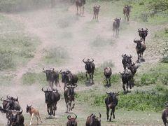 野生の楽園タンザニア(4)ンゴロンゴロ自然保護区・ンドゥトゥ