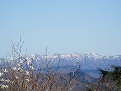 福井でお花見ハイク~ 鍋倉岳ー藤倉岳は純白のタムシバが満開でした