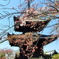 春の奈良(?大阪) Ⅰ 生駒山~叡福寺